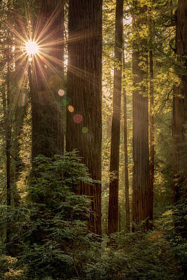 Photograph - Sparkle In The Redwoods by Jon Ares