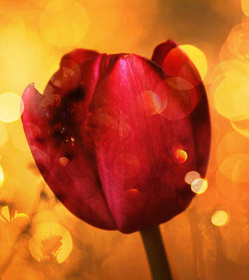 Yellow Digital Art - Sparkle Of The Tulip by Cathie Tyler