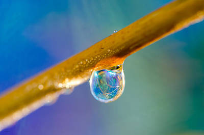 Photograph - Sparkle Raindrop by Crystal Wightman