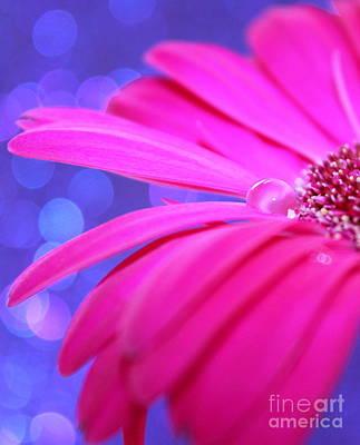 Daisy Photograph - Sparkle Within by Krissy Katsimbras
