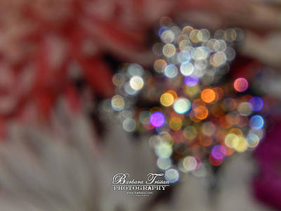 Photograph - Sparkles #8885_0 by Barbara Tristan