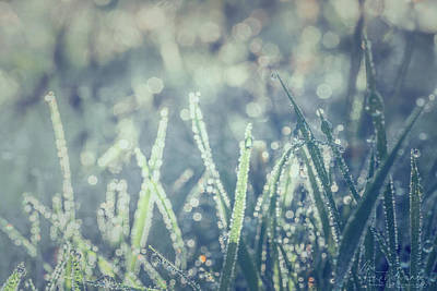 Photograph - Sparklets by Gene Garnace