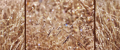 Photograph - Sparkling Autumn Grasses by Leda Robertson