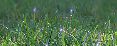 Photograph - Sparkling Dew Drops by Yumi Johnson