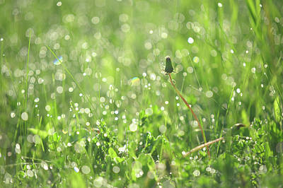 Photograph - Sparkling Morning. Green World by Jenny Rainbow