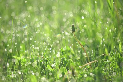 Photograph - Sparkling Morning. Green World by Jenny Rainbow