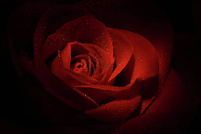 Love Photograph - Sparkling Red Rose by Lori Deiter