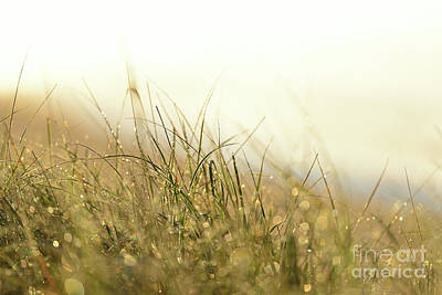 Photograph - Sparkly Sea Grass by Joshua McCullough