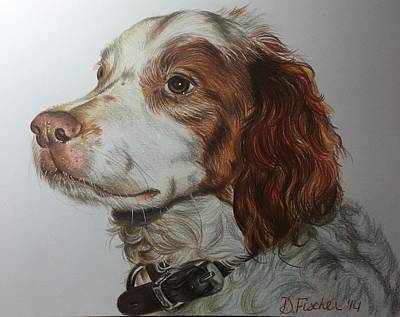 Brittany Spaniel Drawing - Sparky by Debbie Fischer