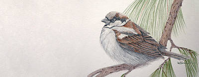 Sparrow Among The Pines Art Print by Leslie M Browning