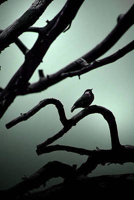 Dave Taylor Photograph - Sparrow And The Ant by Dave Taylor