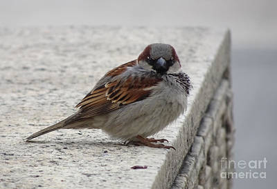Art Print featuring the photograph Sparrow by Angela DeFrias