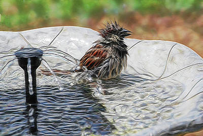 Digital Art - Sparrow Bath Time 9242 by Ericamaxine Price