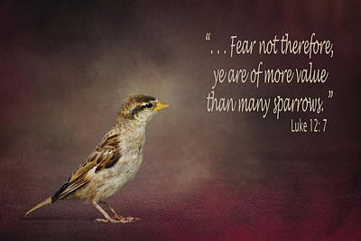 Photograph - Sparrow - Bible Verse by Nikolyn McDonald