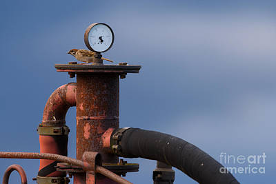 Helsinki Photograph - Sparrow Checking Air Pressure Before Takeoff by Mikko Palonkorpi
