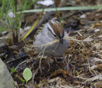 Photograph - Sparrow Gathering Nesting Material Painting by Donna L Munro