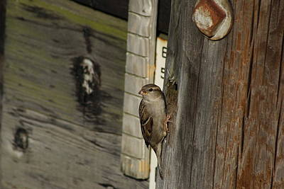 Photograph - Sparrow In Pier Townhouse by Margie Avellino