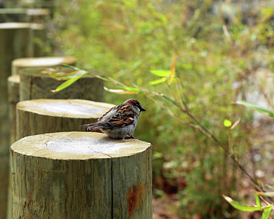 Photograph - Sparrow In Spring by Brooke T Ryan