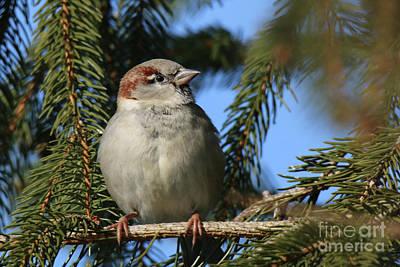 Photograph - Sparrow In The Sun by Ludek Sagi Lukac