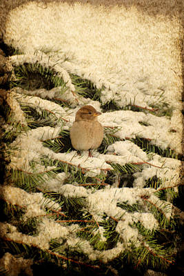 Photograph - Sparrow In Winter II - Textured by Angie Tirado