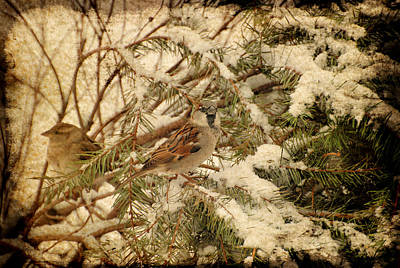 Photograph - Sparrow In Winter Iv - Textured by Angie Tirado