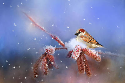 Photograph - Sparrow In Winter by Theresa Tahara