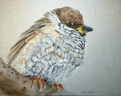 Pastel - Sparrow by Joan Mansson