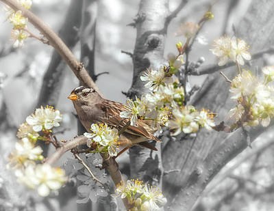 Photograph - Sparrow On The Branch by Jonathan Nguyen
