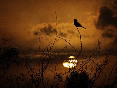 Photograph - Sparrow Silhouette by Charles McKelroy