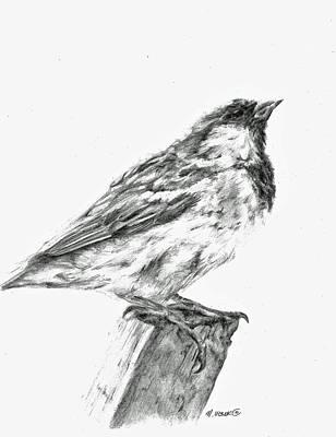 Sparrow Study Art Print