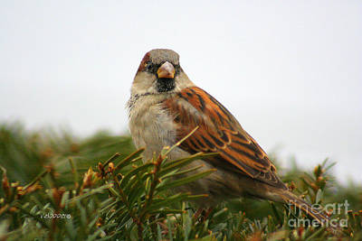 Wall Art - Photograph - Sparrow by Vicki Hopper