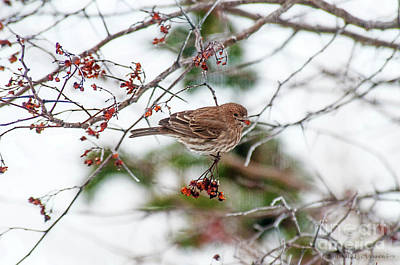 Photograph - Sparrow With Seed by David Arment