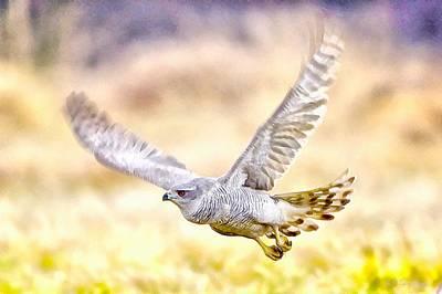 Sparrowhawk Painting - Sparrowhawk by Maciej Froncisz