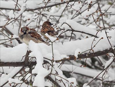 Sparrows And Snow  Art Print by Robert Ullmann