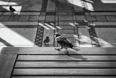 Photograph - Sparrows At My Table by Dean Harte