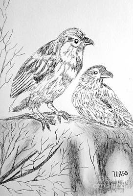 Drawing - Sparrows by Maria Urso