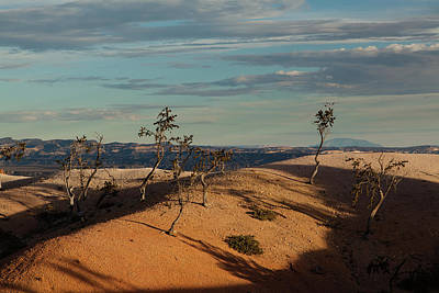 Photograph - Sparse Trees At Bryce Canyon by Alan Vance Ley