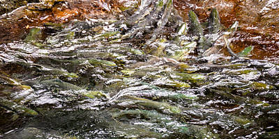 Photograph - Spawning by Ronda Broatch