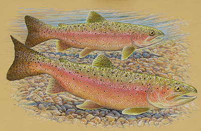 Painting - Spawning Trout by Shari Erickson