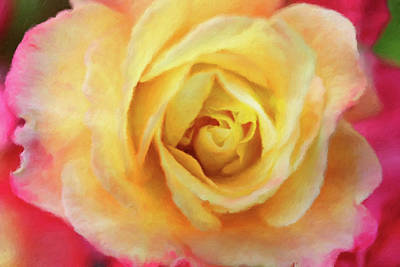 Golden Rose Photograph - Speak To Me Of Roses by Connie Handscomb