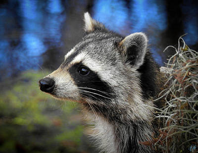 Animals Photos - Speakina Coons by Elie Wolf