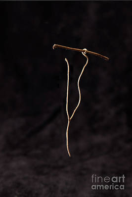 Tendrils Photograph - Spear Thrower  by Larry Braun