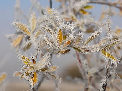 Photograph - Spears Of Frost by DeeLon Merritt
