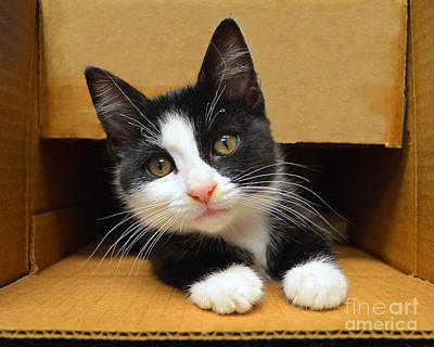 Special Delivery Tuxedo Kitten Art Print by Catherine Sherman