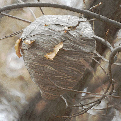Hornets Nest Photograph - Special Home by Ernie Echols
