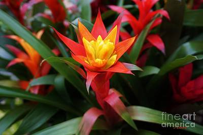 Bromeliad Photograph - Special by John Clark