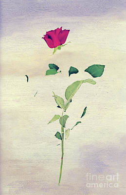 Surprise Mixed Media - Special Rose by Svetlana Sewell