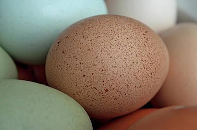 Speckled Brown Egg Art Print by Cathy Mahnke