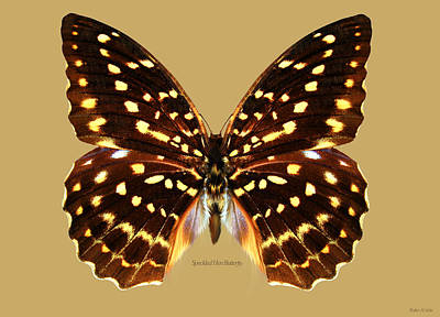 Digital Art - Speckled Hen Butterfly by Walter Colvin