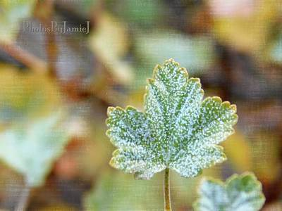 Photograph - Currant Leaf by Jamie Johnson